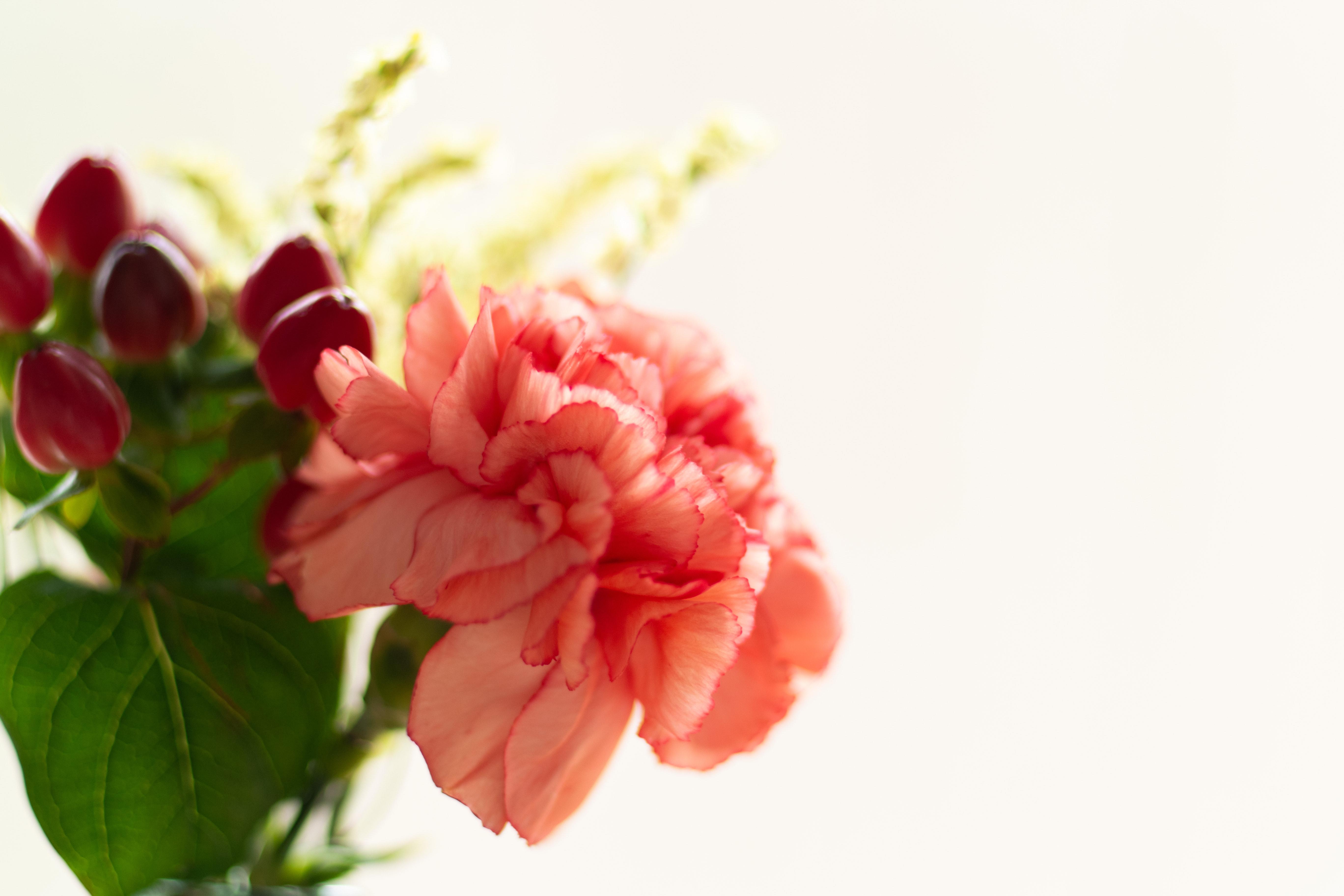 大変な時こそ心のゆとりを。暮らしに花を飾るデザイン。